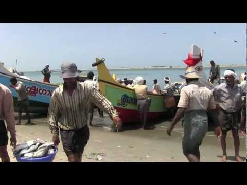 Arabian Sea - Fishing on the coasts
