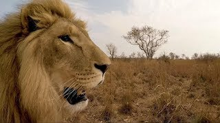 Aren't George and Yame grown up! | The Lion Whisperer