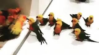 عمرك شفت خناقة عصافير و كل واحد جايب صحابه