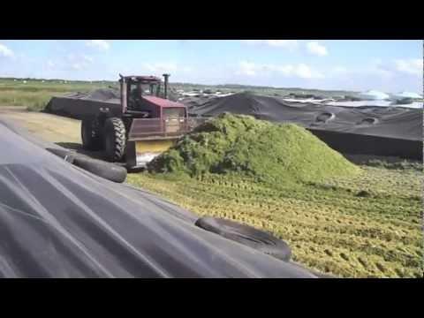 Silage 2011 - Dairy Farming in Canada