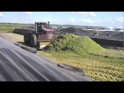 Lydiah: dairy farming
