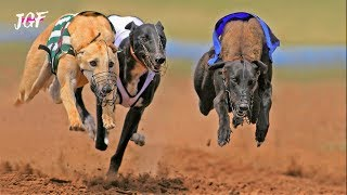 Greyhound Dog Racing  - JerseyGroovyFilms