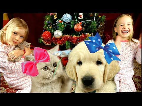 ЛУЧШИЙ ПОДАРОК Мечта СБЫЛАСЬ! Подарки от Деда Мороза Собака под ЕЛКОЙ Подарили ЩЕНКА и КОТЕНКА