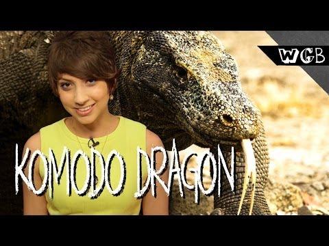 Komodo Dragon Saliva Will KILL You!!!