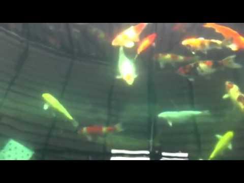 บ่อปลาคาร์พ บ้านธัญญวัฒน์