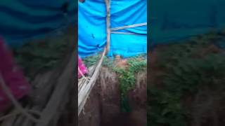Thrilling Live vedio A boy saved life of pet cock in INDIA Subscribe More Vedios 👇