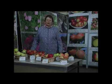 Яблоня и вишня в Московской области – вопросы и ответы по сортам