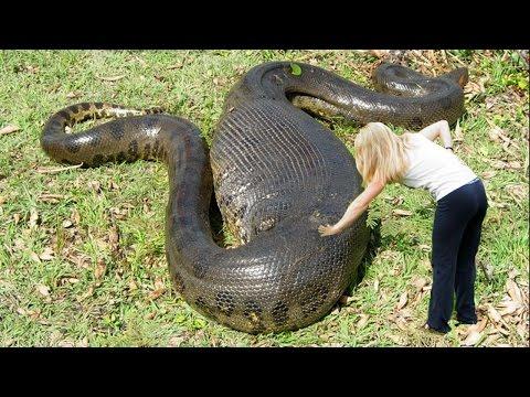 10 самых крупных змеи