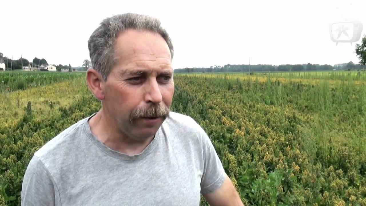 Cultures de quinoa en sarthe youtube for Plante quinoa