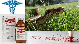 Snake Respiratory infection Tylan 200 R.I. treatment Snake stress