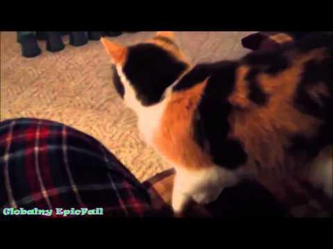 Очень спящие пушистики. Котенок спасает руку от падения. Лучший юмор с животными 2014