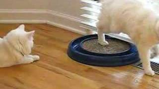 Cats play with ball toy
