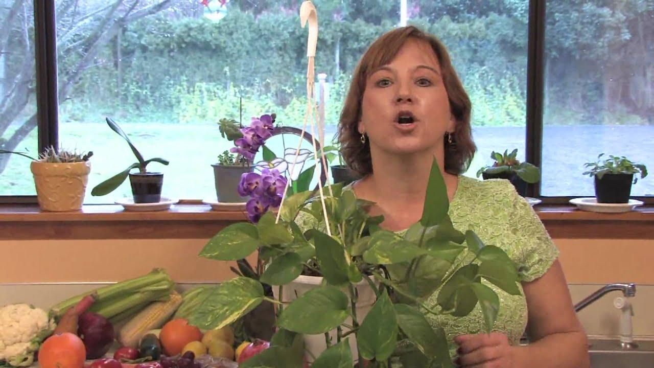 Garden Lawn Maintenance Which Indoor Plants Thrive In