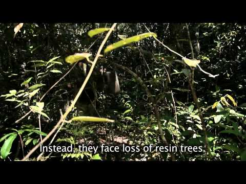 Film In Memory Of Cambodian Logging Activist Chut Wutty video