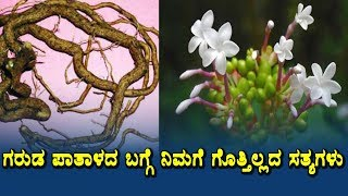 Amazing benefits of Sarpagandha | Health secrets of Ayurveda herbs | Health tips Kannada