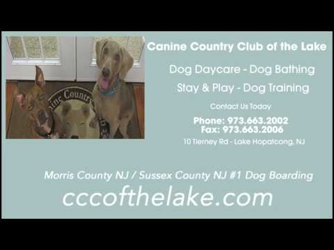 Branchville NJ Dog Boarding