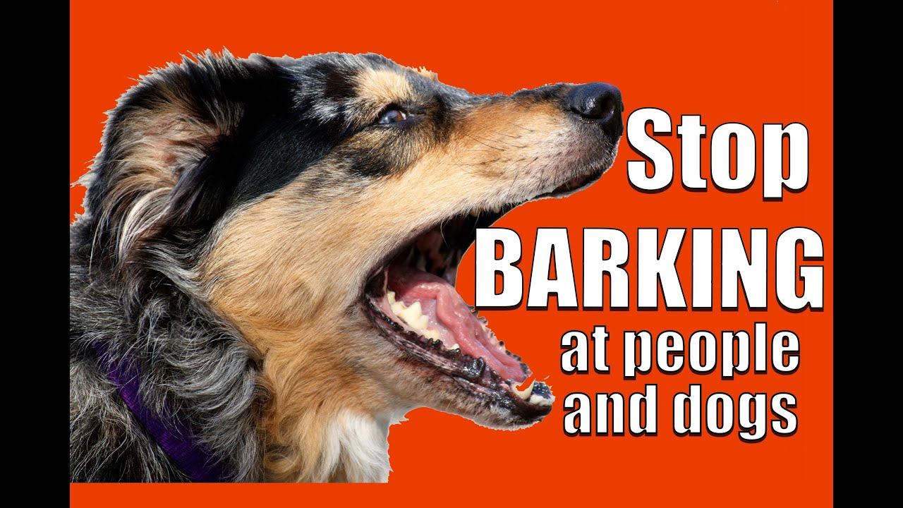 My Dog S Are Barking