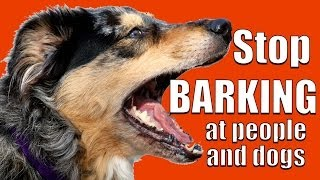 How to TEACH ANY DOG NOT to BARK at Other DOGS and PEOPLE on a Walk