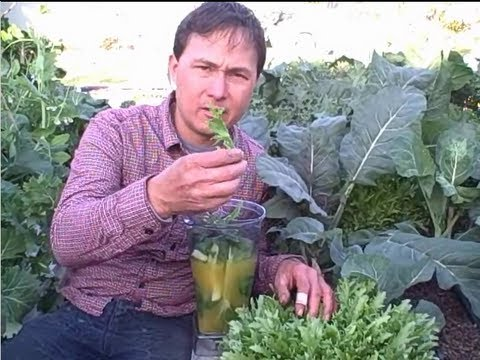 Easy Green Smoothie Recipe Fresh Picked from the Garden