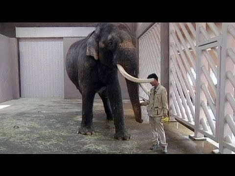 image vidéo الفيل الكوري الذي يتكلم