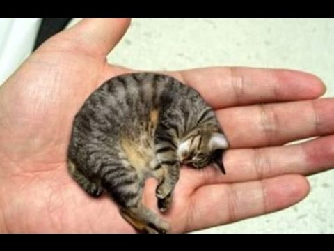 13 Smallest Animals In The World