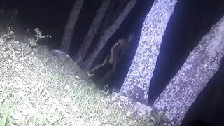 Police take Photograph of Alien Being in Argentina