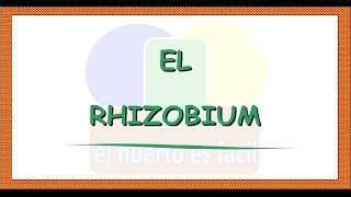 Bacterias Rhizobium y Leguminosas