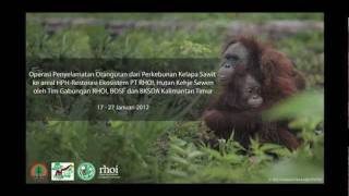 Rescue Orangutan Suci and Sri (East Kalimantan).FLV