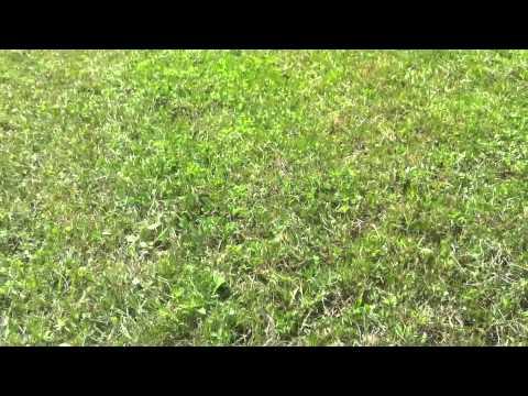 MegMo Blades - John Deere 318 w/46 inch deck