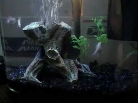 Tetra Fresh Water Aquarium - Tetra, Molly, Cory Catfish Video