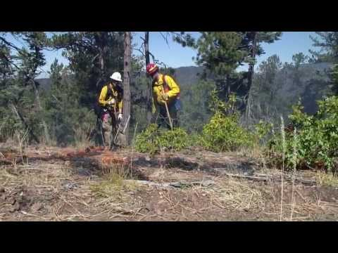 Forest Management and the 2011 Wallow Fire