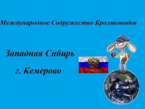 Кролики Западная Сибирь г. Кемерово