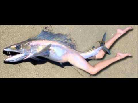 Strange Fish With Human Parts Found In Ibadan, Oyo State, Nigeria video