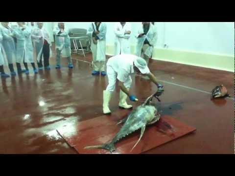 Ronqueo de atún de almadraba en Barbate