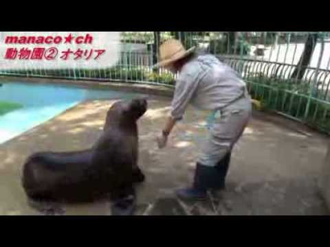 福岡市動物園(2)オタリア (Fukuoka City Zoological Garden ~Otaria flavescens~)