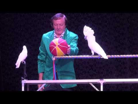 Дрессированные попугаи (2013)
