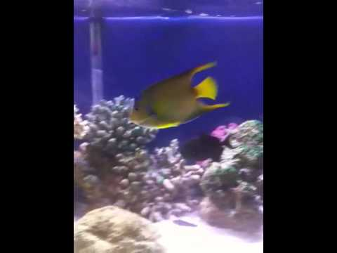 Salt water fish tank 125 gallon Video
