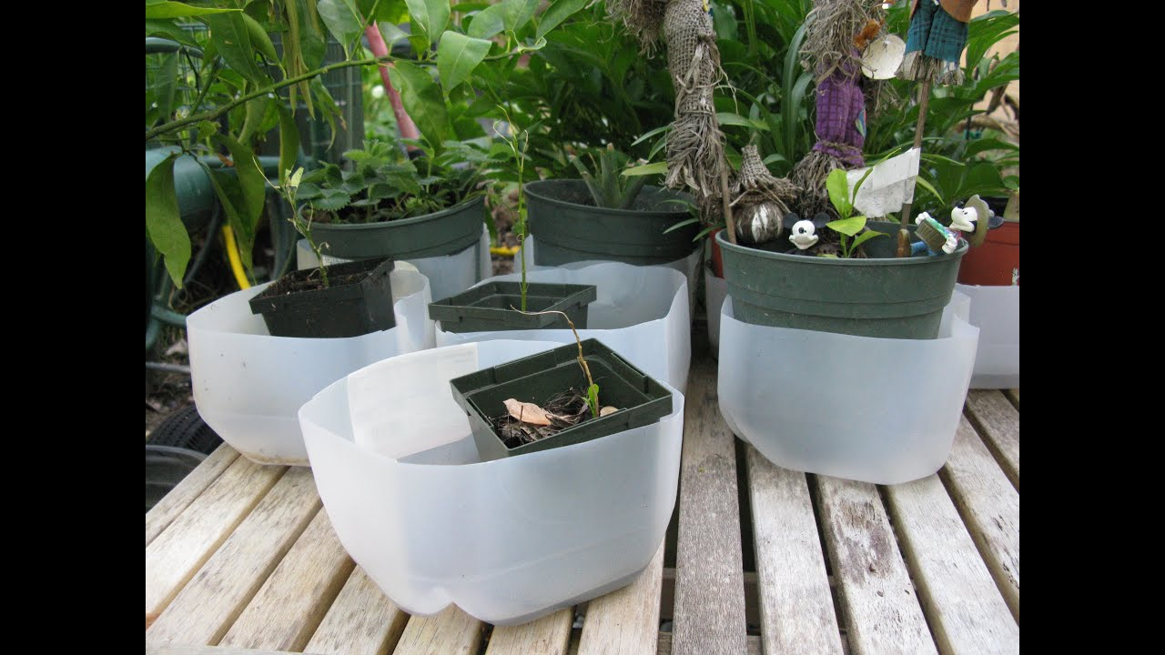 How To Make Empty Milk Jug As Plant Drain Tray Container ...