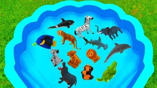 Learn Lots of Animals For Children In Blue Pool For Kids - Animals With Safari Videos For Children