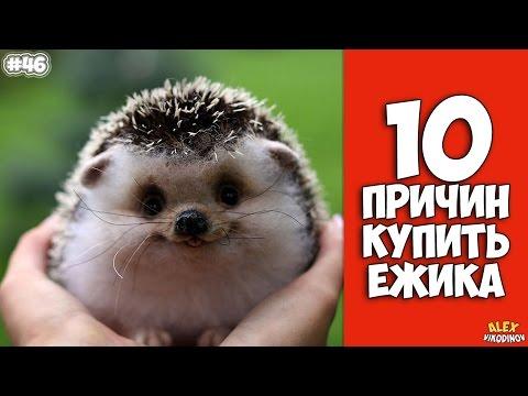 10 ПРИЧИН КУПИТЬ ЁЖИКА - Интересные факты!