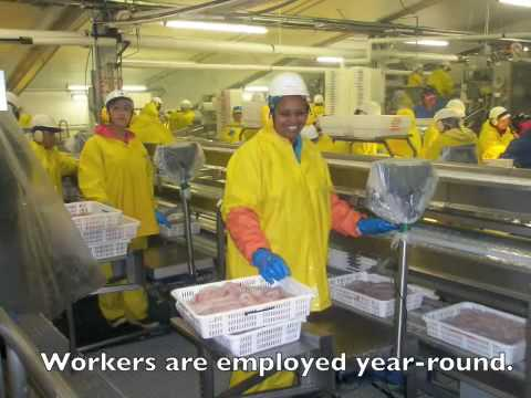 Trident seafood plant at akutan alaska youtube for Seattle fishing jobs