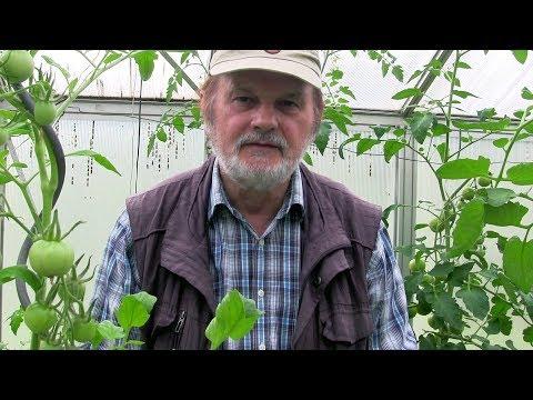 Rückblick in Rot - Tomaten- & Gewächshaus-Saison 2017 Film 53