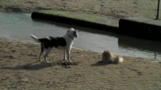 Big dog Barking at Little Dog!