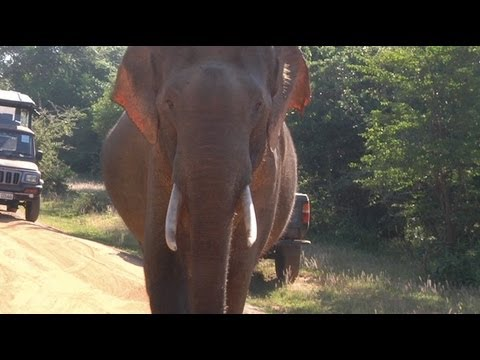 BOOKER TRAVELS - Sri Lanka: First Safari