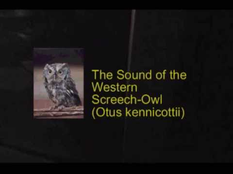 The Sounds of an Owl O...
