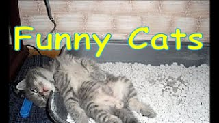 14 Funny Slipping Cats