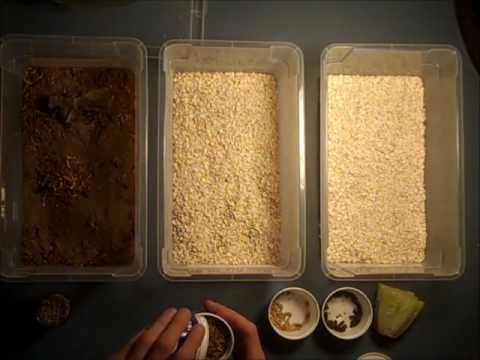 Mealworms: A Guide to Raising and Breeding Mealworms for your Reptiles
