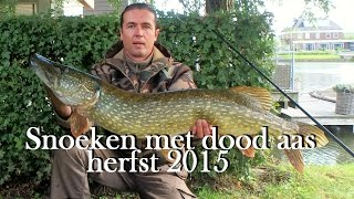 Snoeken met dood aas in de herfst van 2015 - Pike fishing with dead bait in autumn