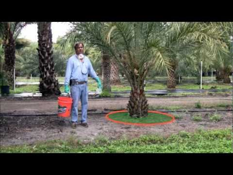 Fertilization of Palms in the Landscape
