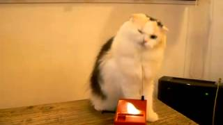 cat plays theremin
